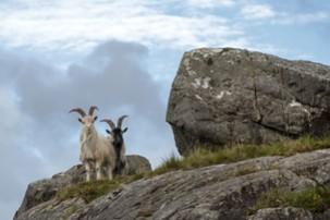 Echt Irland, County Cork/Kerry, Ring of Beara, Irland Urlaub