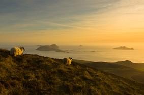 Echt Ierland, Ring of Kerry, schaap, Irland Urlaub